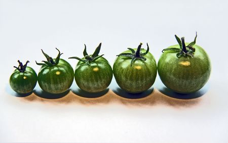 5 green tomatos photo
