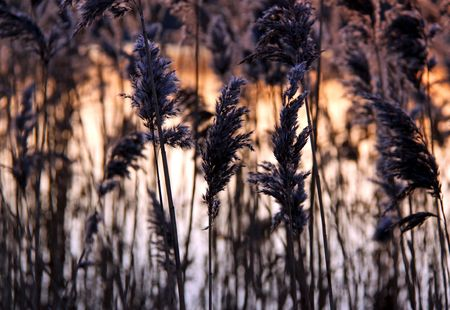 Reeds and rushes on a lake side and an orange sunset Stock Photo - 6192447
