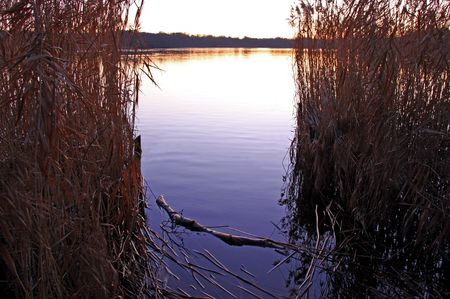 Reeds and rushes on a lake side and a sunset Stock Photo - 6192456