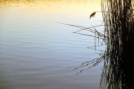 Reeds and rushes on a lake side and a sunset Stock Photo - 6192443