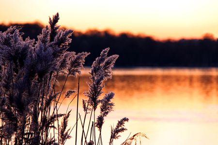 rietkraag: Sunset winter weergave van meer en reeds op dusk