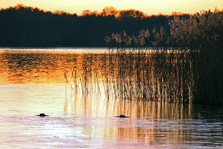 Sunset winter view of lake and reeds at dusk Stock Photo - 6193333