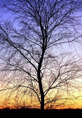 Winter tree branch detail and a golden sunset with blue sky Stock Photo - 6192457