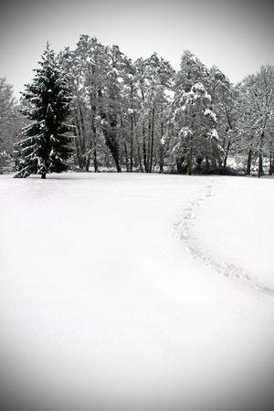 forrest: Koude winter landschap van woud bomen onder een deken van zware sneeuwval