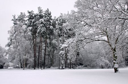 Cold winter landscape of forest trees under a blanket of heavy snow Stock Photo - 6408783