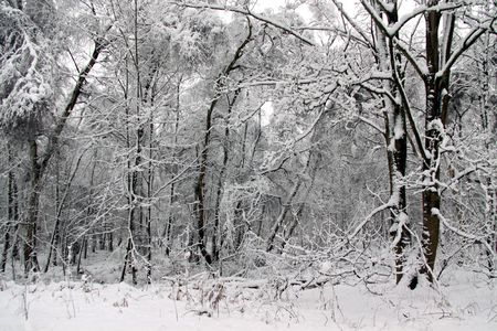 Cold winter landscape view of trees and flora in heavy snow Stock Photo - 6408766