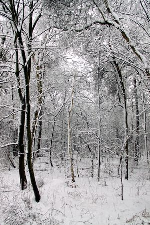 Cold winter landscape of forest trees under a blanket of heavy snow Stock Photo - 6408782