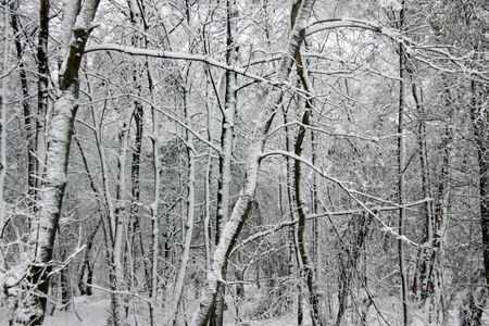 Cold winter landscape view of trees and flora in heavy snow Stock Photo - 6408779