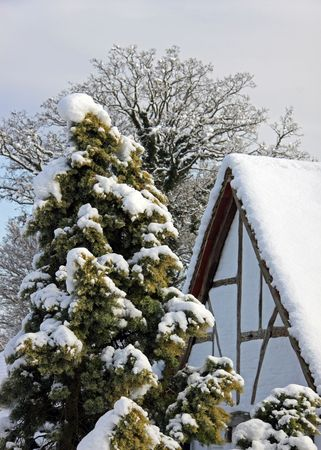 Winter view of an old oak beamed cottage and trees in snow Stock Photo - 6423786