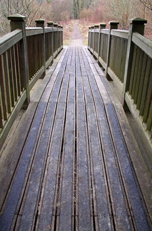 bridged: A wooden bridge crossing over into forest trees