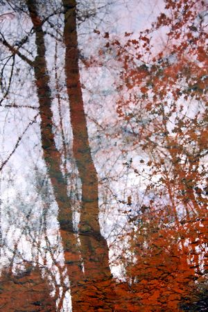 Forest trees reflected in water with orange autumn leaves photo