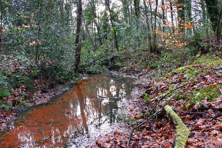 A forest stream red with autumn leaves Stock Photo - 6529373