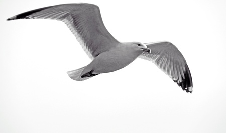 Sea gull bird flying Stock Photo - 9634524