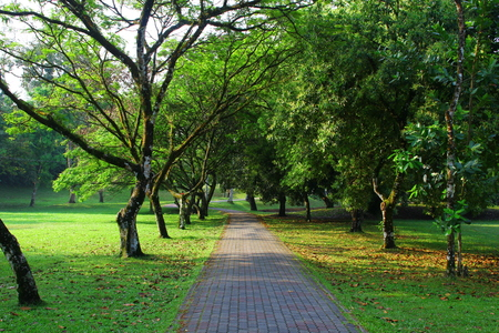 alley: Beautiful park alley with jogging track