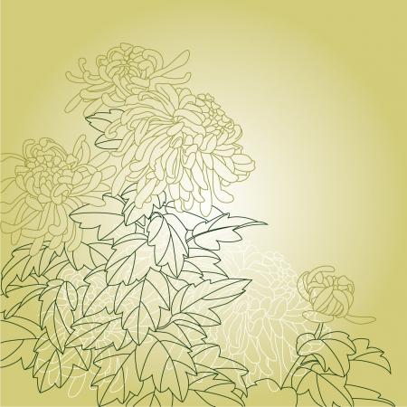 Flos Chrysanthemi