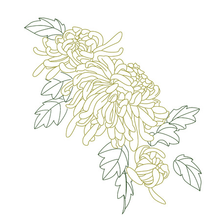 chrysanthemum: chrysanthemum sketch Illustration