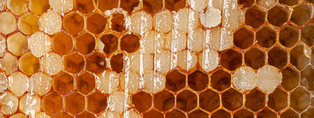 Honeycombs filled with honey. background image, copy space text