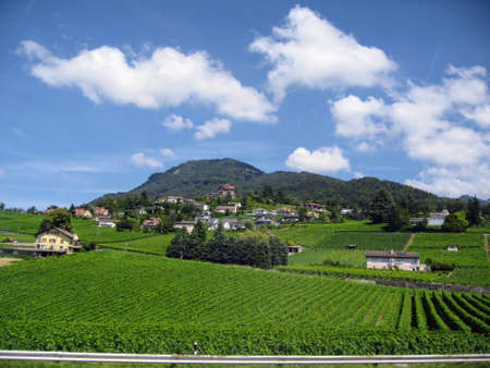 Bright green vineyards spread out against a backdrop of dark mountains and blue skies. Foreground 写真素材