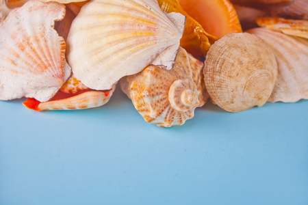 Many different seashells on the blue background. Top View. Copy space.