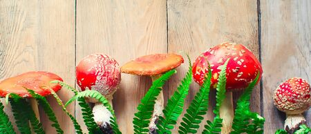 fly agaric toxic mushrooms on the old wooden table