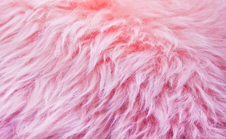pink fur background texture, animal wool texture, nature wool fluffy. Imagens