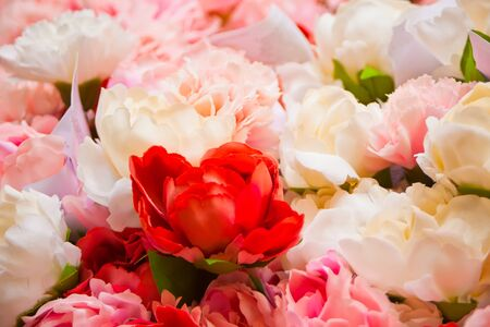View of beautiful blooming flowers as background