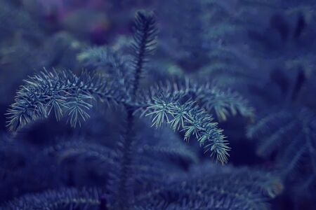 plant like pine tree leaves texture background in a classic blue color trend 2020 year. Imagens