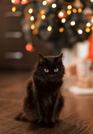 Black cat looking at camera and bokeh on the background.