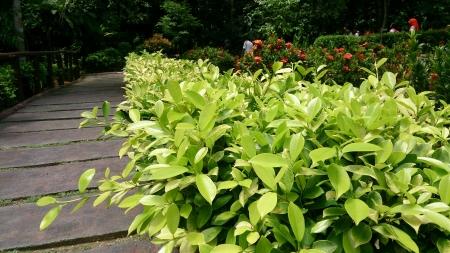green nature: Green Nature Stock Photo