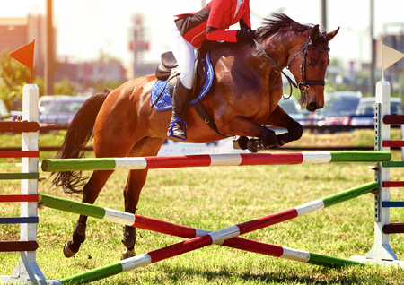 The rider on the horse jumping over obstacles 版權商用圖片