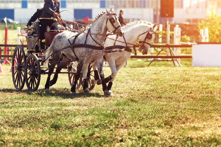 Chariot race with obstacles and horses 版權商用圖片