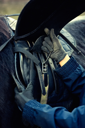 Leather saddle horse getting ready close up details 版權商用圖片