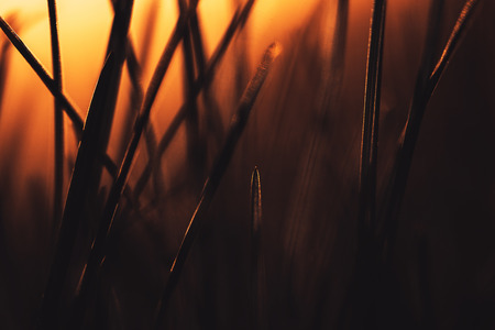 Graded shot of natural growing grass field background