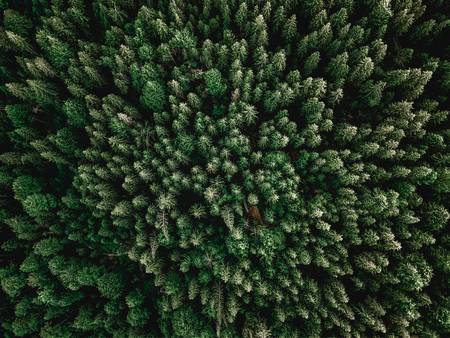 Forrest aerial shot with trees sunlight perfect for background