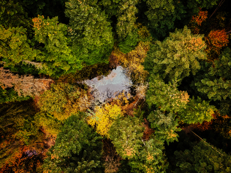 A view above the trees of a forrest to a lake with blue water 版權商用圖片