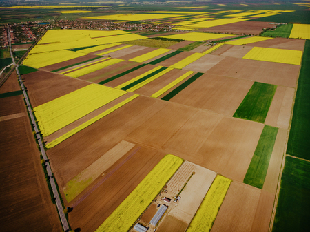 Aerial View of Oilseed Rape Field ready for harvest