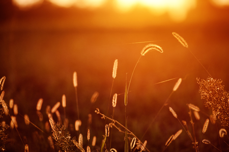 Grass Meadow golden hour Sunset Sunrise Sunlight