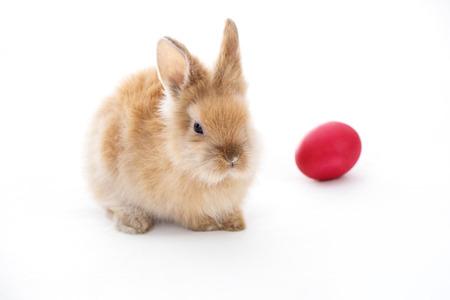 Cute little bunny rabbit isolated on white background 写真素材