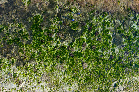 Tropical sea coral reef background. Geger Beach, Indonesia. Drone view.