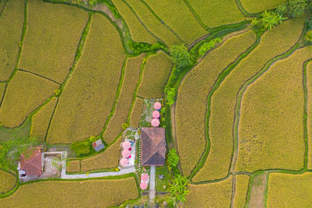 Aerial view of cafe between rice fields in Bali Фото со стока