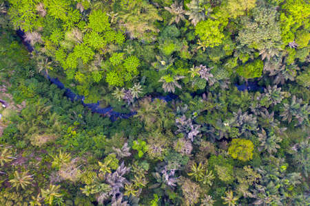 Top View of River in Rainforest. Jungle in Ubud, Bali, Indonesia