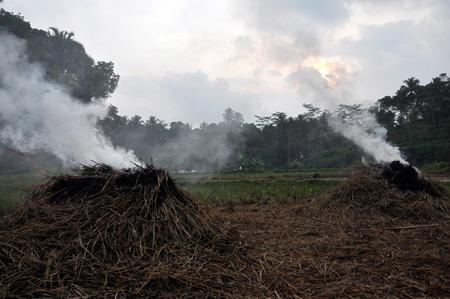 quemadura: quemar la paja Foto de archivo