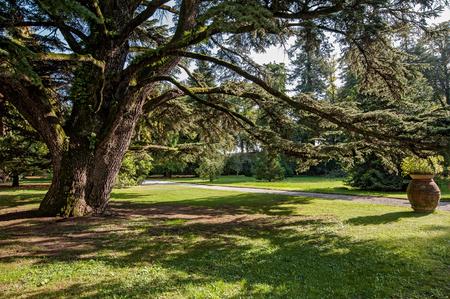 monumental tree in botanical garden