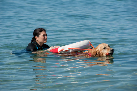Lifeguard dog and instructor at the beach, during training. Stock Photo