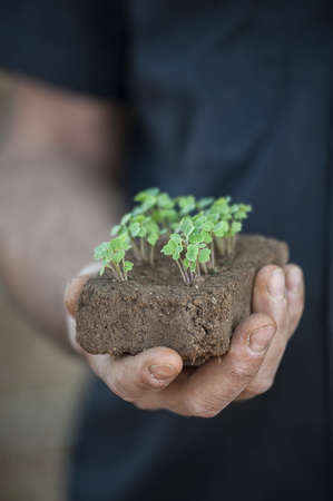 One hand holds young shoot plants that grows from a lump of soil