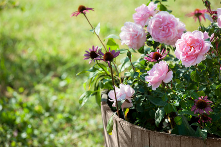 echinacea: A beautiful composition of summer flowers, in a wooden vat.
