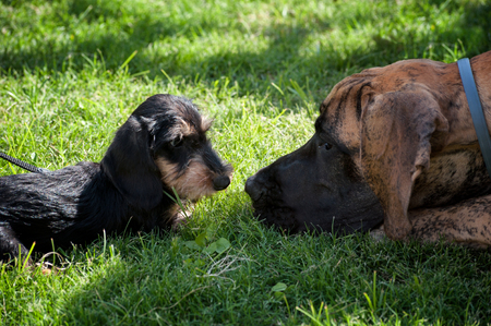 Two dogs face to face on the grass, look each other in the eye.
