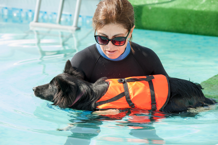 Dog trainer at the swimming pool, teaching the dog to swim. Stock Photo