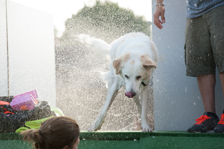 White dog shake off water after swim Stock Photo