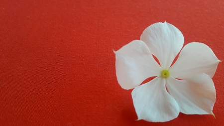 white: White flowers on a red background.